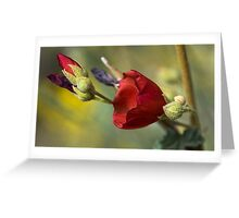Globe Mallow Delicate Red Flower Greeting Card