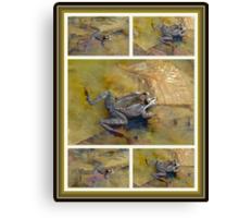 PICKEREL FROG - Rana Palustris Canvas Print