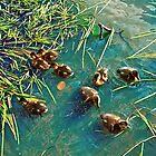 Ducklings by Malgorzata Larys