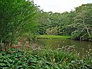 Oyster Pond From Spohr Gardens - Falmouth MA by MotherNature