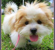 My Fluffy Little Friend by AuntDot