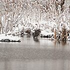 Heron in the Snow by ilis  Finnerty Warren
