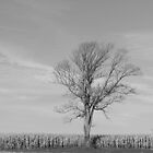 Lone Tree by ilis  Finnerty Warren