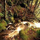 Mountain stream, Tasmania by Kevin McGennan