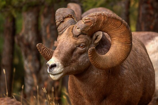 Battle Ram by JamesA1
