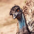 Inquisitive Emu by Josie Eldred