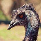 Inquisitive Emu II by Josie Eldred