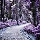 Purple Woods by Filipa Nunes