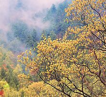 SPRING BELOW THE CHIMNEY TOPS by Chuck Wickham