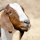 Goat by Robyn Meyer