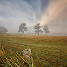 Paddock in Morning Fog, Woodstock, Tasmania by Chris Cobern
