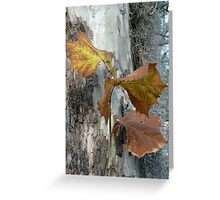 Sycamore gold Greeting Card