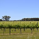 Margaret River Wine by Caroline Rodger