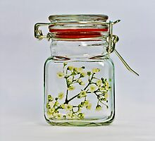 Spring in the jar. by katarina86