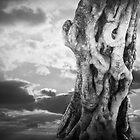 World Tree by olga zamora