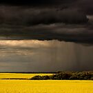 Rain front approaching Saskatchewan canola crop by pictureguy