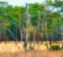 The Pine Flats  by Karen Peron
