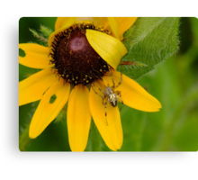 Small Jewel In My Garden Canvas Print