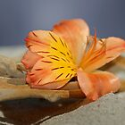 Seaside Flower by CathyS