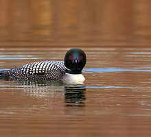 Jaded Loon by JamesA1