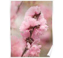 Spring arrives softly Poster