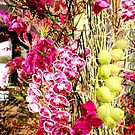 MIFGS - Orchids - Two by Sammy Nuttall