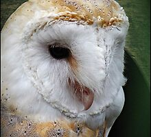 """Taken at the ""Screech"" Owl Sanctuary""  "" Name of the owner"" by mrcoradour"