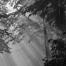 rays of hope by dc witmer