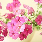 Pink Flowers by Anaa