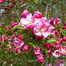 Crabapple Spring in Alabama by Vivian Eagleson