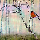Bullfinch On Birch by Igor Zenin