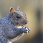 Grey Squirrel 2 by Jane-in-Colour