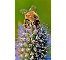 spring Bee Photographic Print