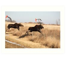 Young moose leaping over barbed wire fence Art Print