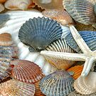 Sea Shells  by Monte Morton