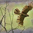 Hawk On The Hunt by Deborah  Benoit