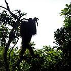 Orangutan Silhouette 2 by photogart