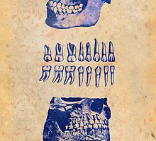 Dental Anatomy blue by filippobassano