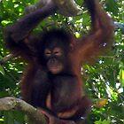 Orangutan Giggle by photogart