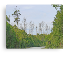 Avenue of Lost Giants Canvas Print