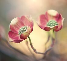 Dogwood by Tracy Jones