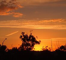 Early morning Kilmore East Vic Australia by Margaret Morgan (Watkins)