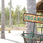 Organic Trash in Bali by ladyogaga