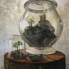 Terrarium by Cynthia Decker