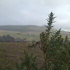 Strathpeffer walk by Phatcat