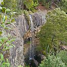 Preston Falls, Tasmania by Margaret  Hyde