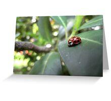 Ladybird on a leaf (2) Greeting Card
