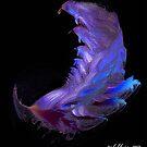"""Male Crustacean"" - Fighting Class by Patrice Baldwin"