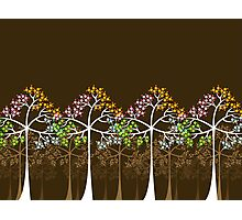 Four Seasons Trees Photographic Print