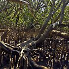 Fingers in the mangroves by Ersu Yuceturk